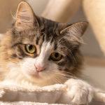 Tag der Katze 2019 – Fotoshooting