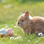 Kaninchen JETZT impfen