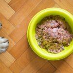 Trockenfutter und Feuchtfutter mischen?